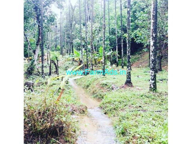 5 acre average maintained coffee Areca Plantation for sale in Mudigere