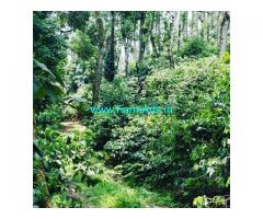 19.11 acre coffee estate for sale in Chikkamagaluru