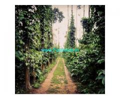 331 acres coffee estate for sale in Chikkamagalur