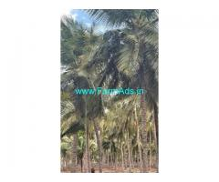 5 Acres Farm Land For Sale In Pethapapatti