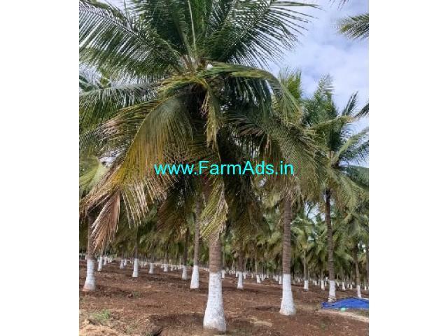 3.5 Acres Farm Land For Sale In Udumalai