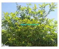 22 Cent Farm Land For Sale In Ongur
