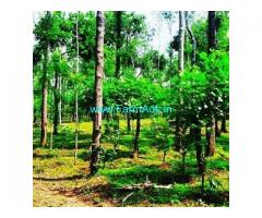 4 Acres Agriculture Land For Sale In Chikkamagaluru