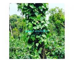 3.5  Acres Farm Land For Sale In Sakleshpura