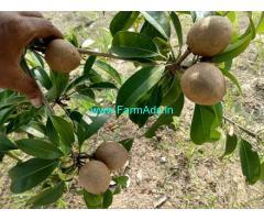 1/4 Acres Agriculture Land For Sale In Uthiramerur