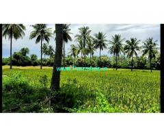 Agriculture punjai 20 acre Patta Land for Sale near Maduranthagam