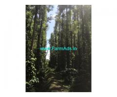 8 acre well maintained Arabica coffee estate sale in Chikmagalur