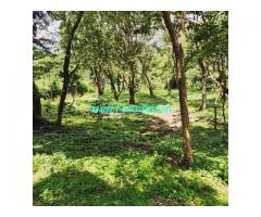 1 Acre Flat and jungle land Available For Sale In Chikmagalur