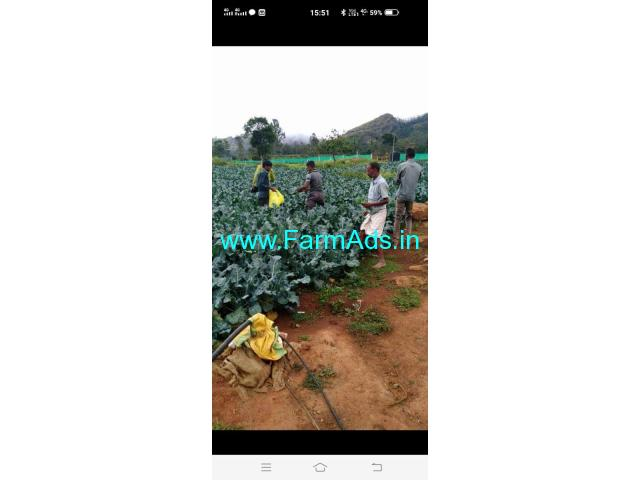 91 Cents Farm Property for sale in Ooty