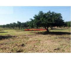 4 Acres Agriculture Land with Mosambi tress For Sale  in Chennur - Kadapa