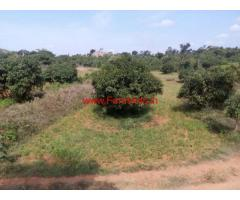 3 Acres Mango Farm Land for sale in Magadi