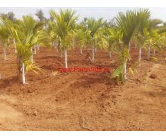 7.5 Acre Areca Farm for sale in Madhugiri - Tumkur