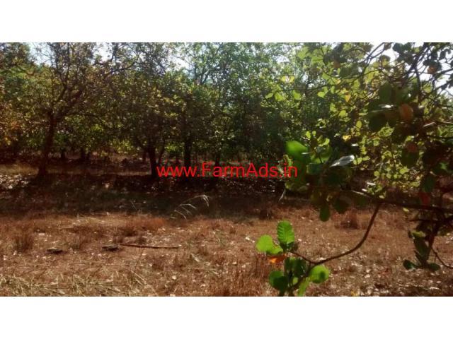 2 Acres Cashew Plantation for sale in Khanapur - Belgavi