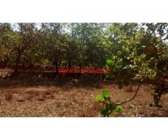 2 Acres Cashew Plantation for sale in Khanapur - Belgavi