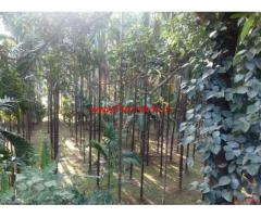 6 Acre Areca and Rubber Farm for sale near Dharmasthala