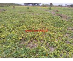 19 acres farm land for sales in sattur - Tamil Nadu