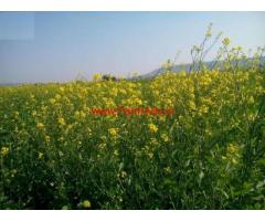 2 Acres Agriculture land for sale 10 KMS from Bhopal