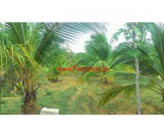 2.25 Acres Coconut Farm Land for sale in Novinkere - Tiptur