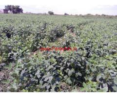 8 acres Farm land for sale in Sattur taluk Virudhunagar