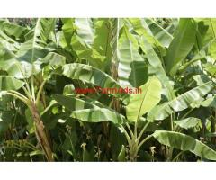 34 cents Agriculture Land for sale at Nagercoil