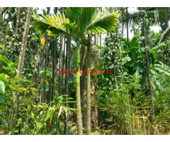 4.5 acre arecanut plantation for sale in agalgandi,  Shringeri koppa road