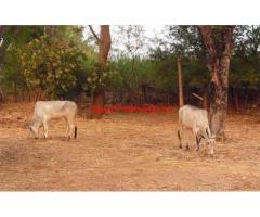 2.17 Acres Agriculture Land for sale in Pethampalayam,