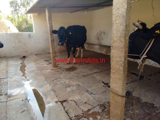 Dairy Farm - Boiler Farm - Layer Farm for rent near Bangalore