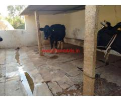 Dairy Farm - Boiler Farm - Layer Farm for rent near Bangalore
