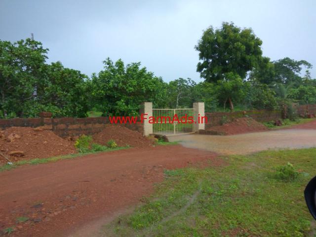 Fully Developed Cashew Farm for sale - kalinga Nagar - Odisha