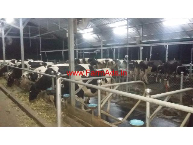 Modern Dairy Farm For Sale At Kozhinjampara