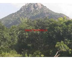 10 Acres Mango Orchard for sale near Gudibande - Chikballapur