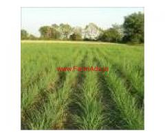5 Acres Agriculture Land for sale at R T Malai
