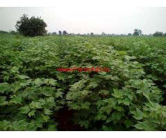 17.5 Acres Agriculture Land for sale in Wardha - Maharashtra