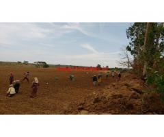 7 Acres Agriculture land for sale at Bilikere - Mysore - Madikeri Road