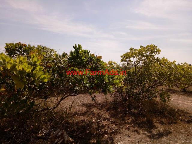 8 Acres of cashew trees farm Land for sale near chickballapur Bangalore
