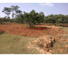 15 Acres Agriculture Land for sale near Denkanikotai towards Aniyalam