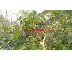 12 Acres Coffee,Pepper,Fruits Trees Estate for Sale in Kodaikanal