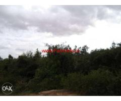 2 Acres Agriculture Land for sale near Thally to Jawalagiri Road