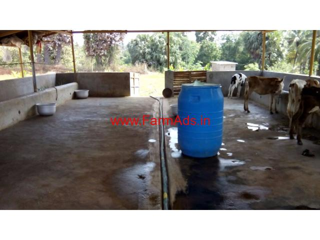 MINI Dairy Farm For Sale in Palakkad