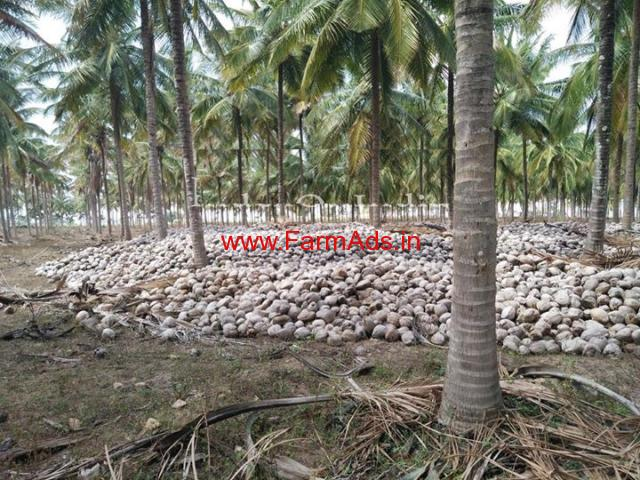 46 Acres Coconut farm land for sale on Mysore to Gundlupet Road