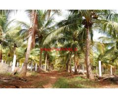 8.60 Acres Coconut Land available for Sale in Battalagundu, Dindigul