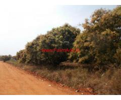 3 Acre Mango Farm for sale near Jawalagiri -Thali