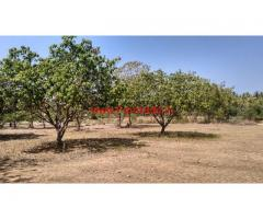 6 Acres Mango Farm for sale 130 KMS from Bangalore on Pondy road.