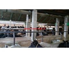 Cow dairy farm for sale at kallar, Thiruvananthapuram.
