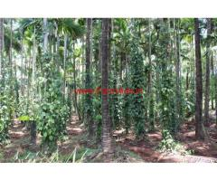 4.75 Acres Farm Land for sale in Mullerya - Kasargod