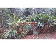 3 Acres Land for sale near Anachal - Munnar