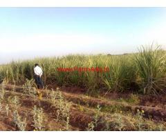 5 Acre Agriculture Land For Sale Rajegoan , Near Bhigwan