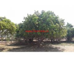 22 Acres Farm Land for sale in Hindupur, Close to Karnataka Border