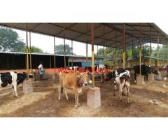 Dairy Farm with 5 Acres Land for sale at Vandavasi in Thiruvannamalai