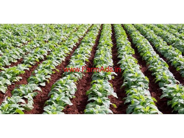 2.1 Acres Agriculture Land for sale in Jarlapalem -Addanki - Inkollu road